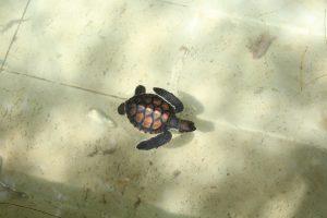 "<img src=""turtle zanzibar.jpg"" alt=""small turtle Zanzibar"">"