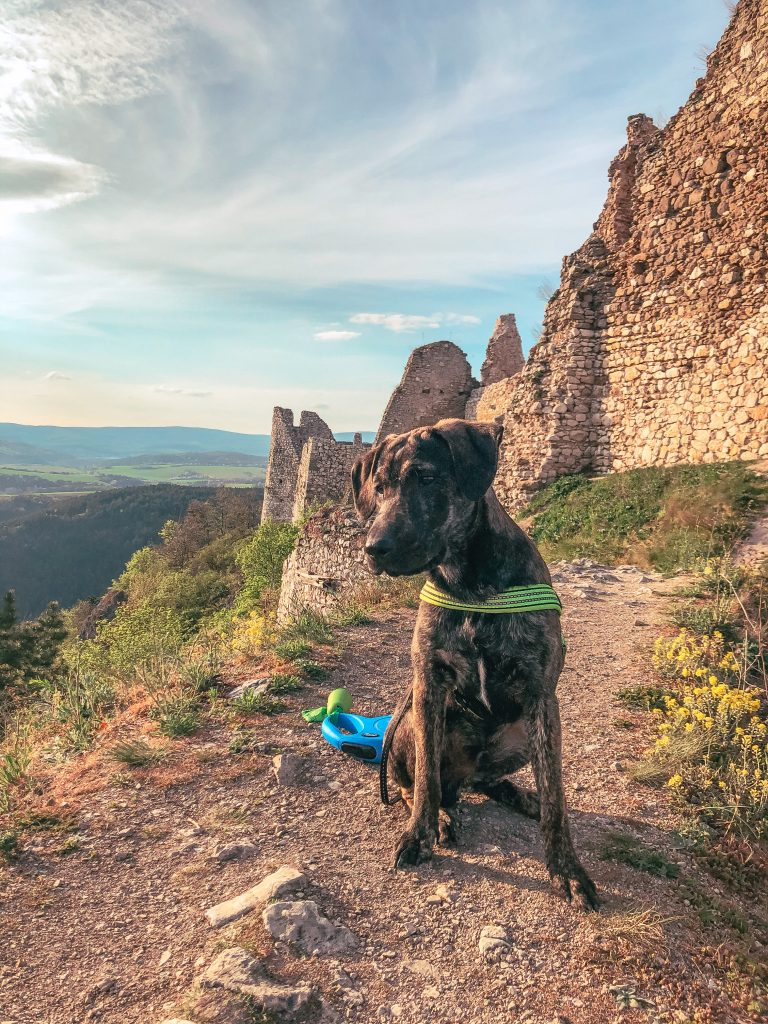 pes na hrade